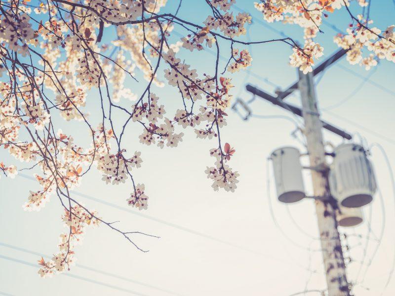The Seasonal Soul Blog by erin bruce. http://www.TheSeasonalSoul.com