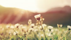 Manifest the Life you Want with this Spring Meditation