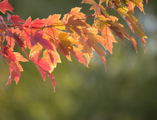A Simple Autumn Equinox to Ritual for Releasing Whatever's Holding You Back. Discover more mabon rituals at www.TheSeasonalSoul.com