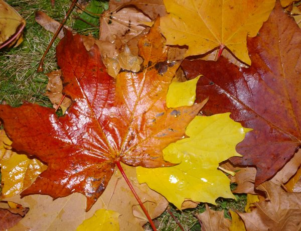 The perfect autumn playlist for cozy, rainy fall days. Listen now at www.TheSeasonalSoul.com