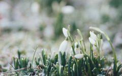 What is the spiritual meaning of Imbolc?