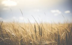 How to Celebrate Lammas - What does Lammas Mean?