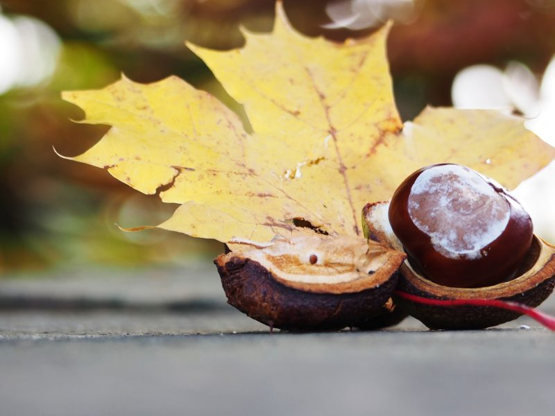 How does the Autumn Equinox Help You Grow? Lessons & Wisdom of Mabon.