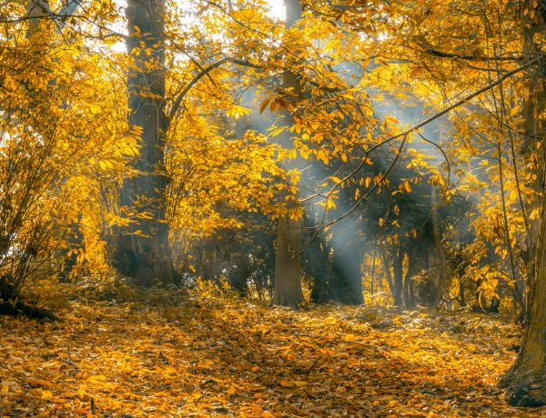 Free Autumn Equinox Ritual * Family Ritual for Mabon