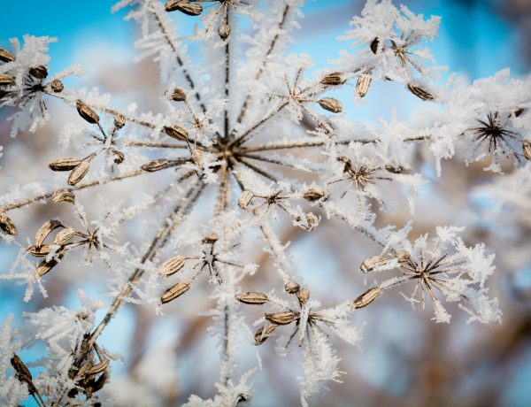 Your 3, crucial, spiritual tasks for winter.