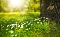 What does the Spring Equinox Mean, personally & spiritually?