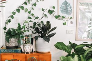 Spring Cleaning - Add plants to your home.