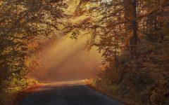 Free Autumn Equinox Ritual & Guidebook